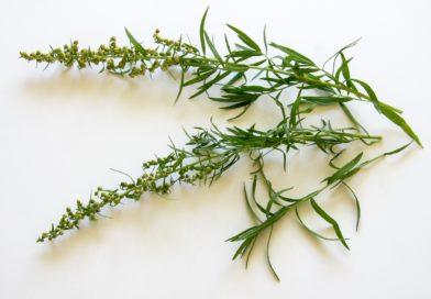 Estragon als natürlicher Appetitanreger